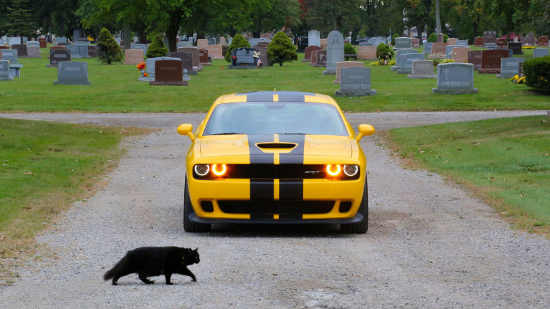 Happy Hellcat Halloween   Autoblog