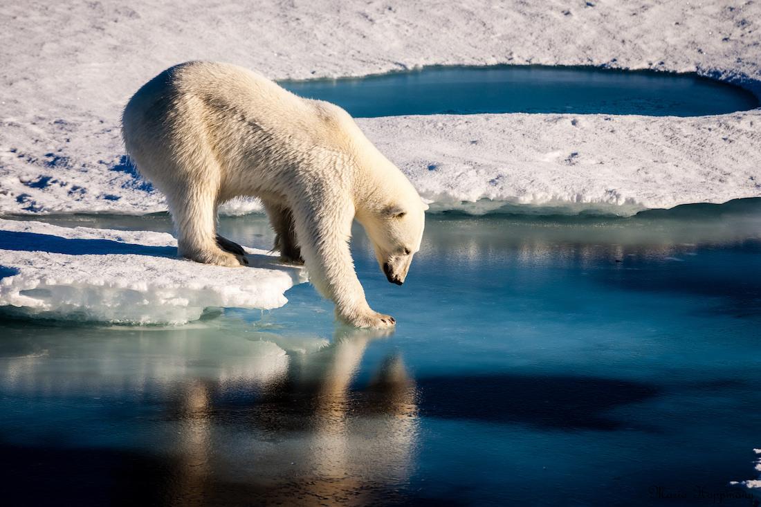 Reimagining Humanity's Obligation to Wild Animals